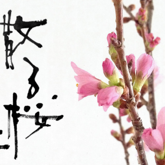 散る桜 残る桜も 散る桜 , some cherry blossoms are falling and the remaining blossoms are going to fall, too